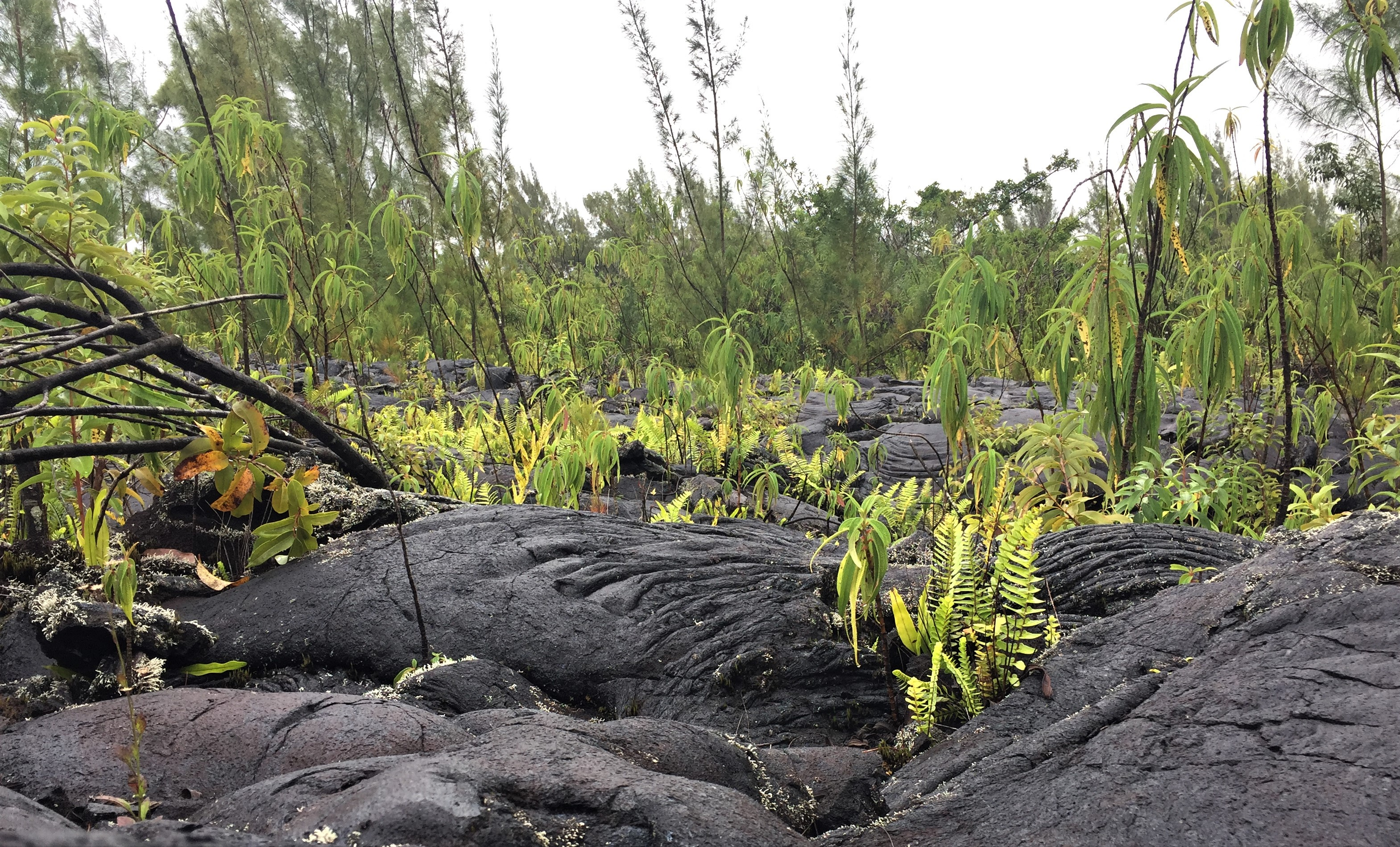 The lava fields